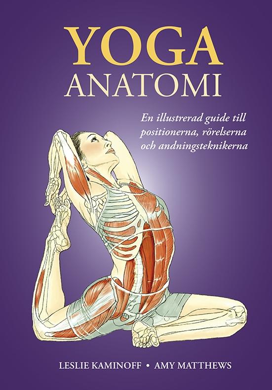 Bild P Yoga Anatomi