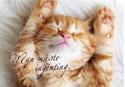 Bild på Man måste ingenting (40x30 cm): kattunge (liggande)