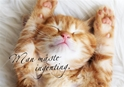 Bild på Man måste ingenting (100x70 cm): kattunge (liggande)