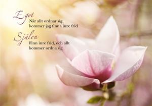 Bild på Egot och själen : magnolia (liggande)