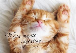 Bild på Man måste ingenting : kattunge (liggande)